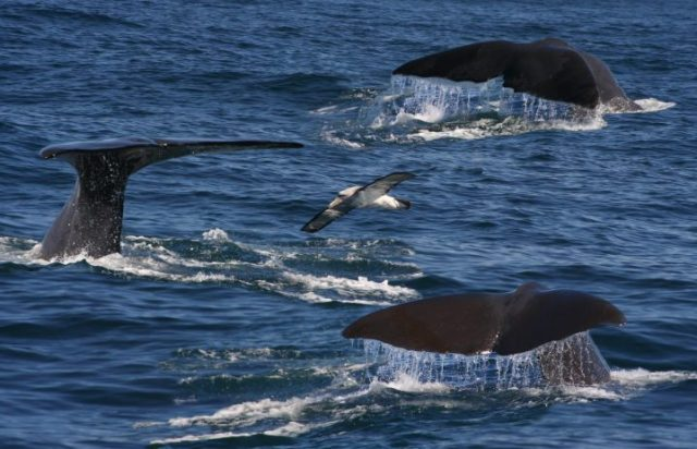 Cabo Expert Whale Watching