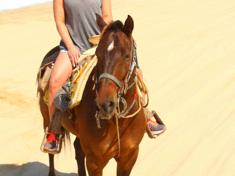 Picacho Horseback (1 of 2)