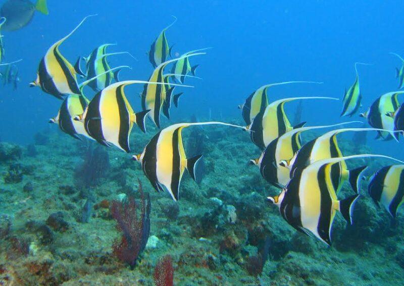 Baja-Natives-Travel-Cabo-Pulmo-Diving4