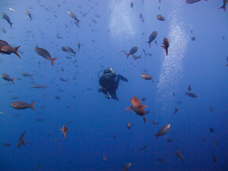 Cabo Trek Private Diving Tour-2