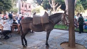Romería de los Burros - San Benito Abad- La Laguna 2015