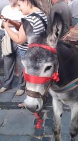 Romería de los Burros - San Benito Abad- La Laguna 2015 (2)