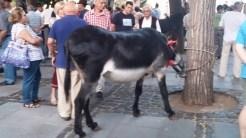 Romería de los Burros - San Benito Abad- La Laguna 2015 (8)
