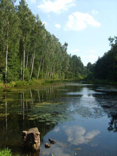 walking-in-the-biryulyovo-arboretum-in-summer