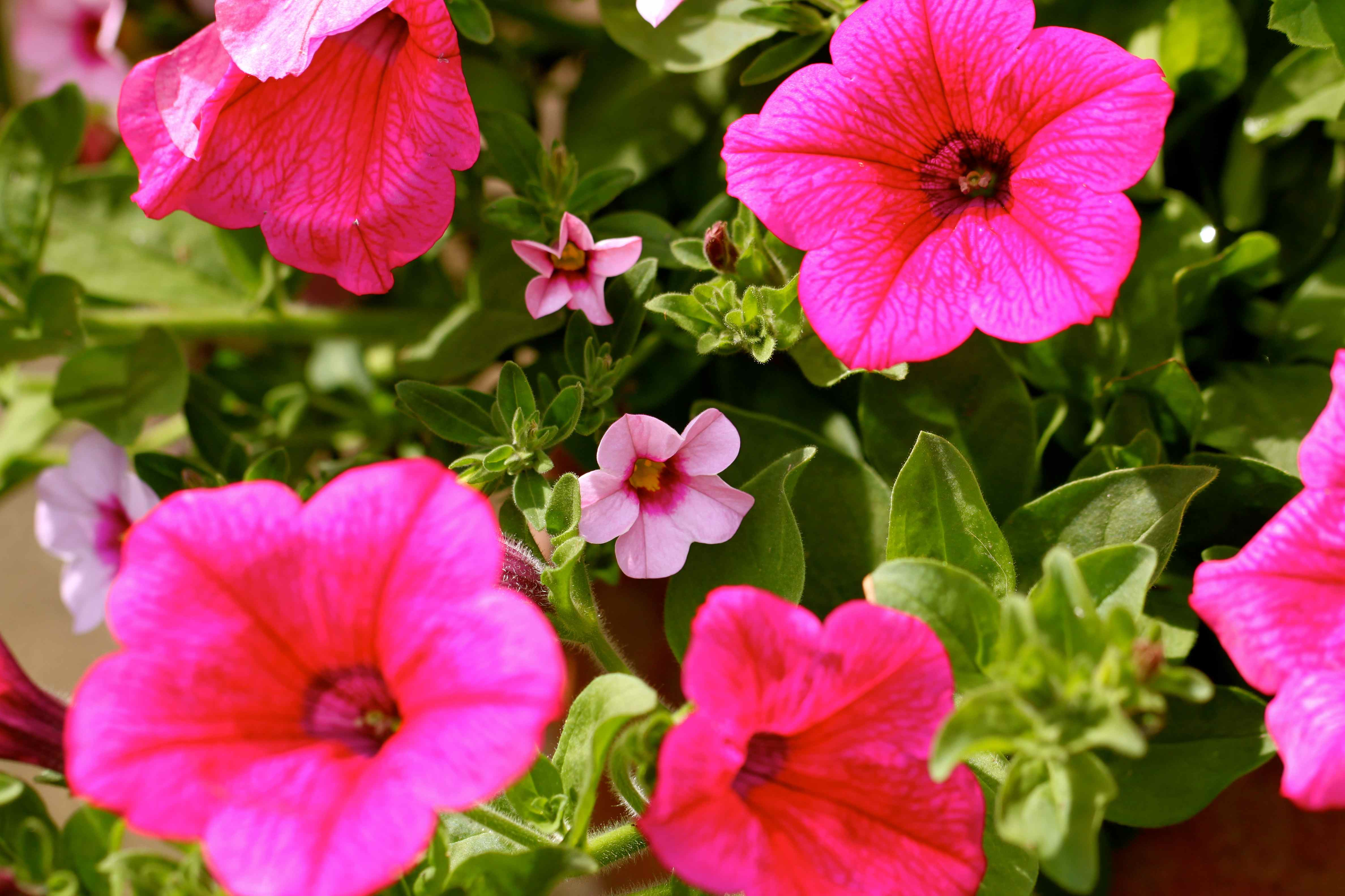 how my garden grows lose weight and gain health