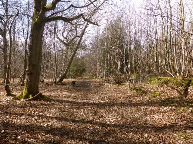 Woods EM 6
