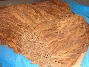 liscie-tytoniu-tyton-burley-idealny-w-gilzy-1-kg-2909441197