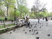 Y este buen hombre que alimenta a todas las palomas de Nueva York