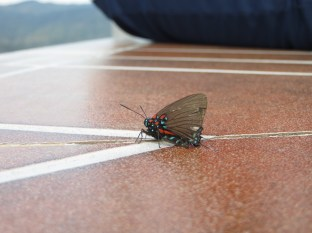 Esta mariposa estuvo un bueeeen rato haciendonos compañía mientras disfrutábamos del aire puro y de las vistas