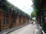 Muchas de las fachadas se caracterízan por estar cubiertas de plantas trepadoras y flores
