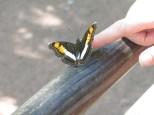 De camino nos encontramos con esta mariposa descarada