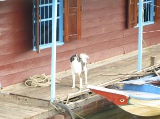 Los perros son los sistemas de protección y alarma más comunes por estas tierras
