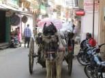 En la India cualquier medio de transporte es válido. Sea un caballo...