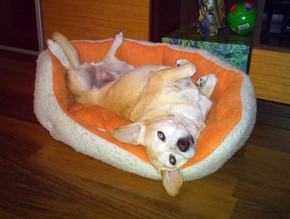 Roly, una perrita con sorpresa