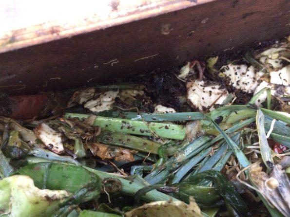 El Vermicompost y el humus de lombriz