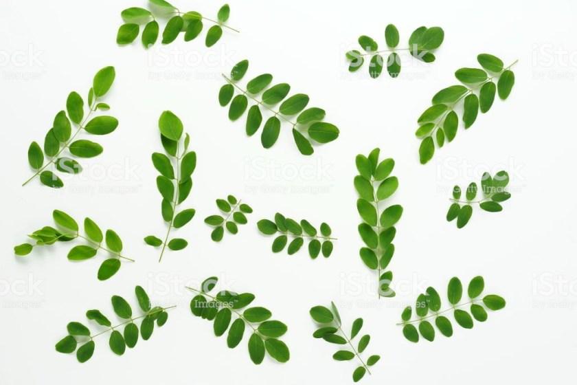 símbolo masoneria acacia ramas