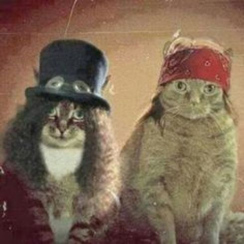 guns-n-roses-gatos