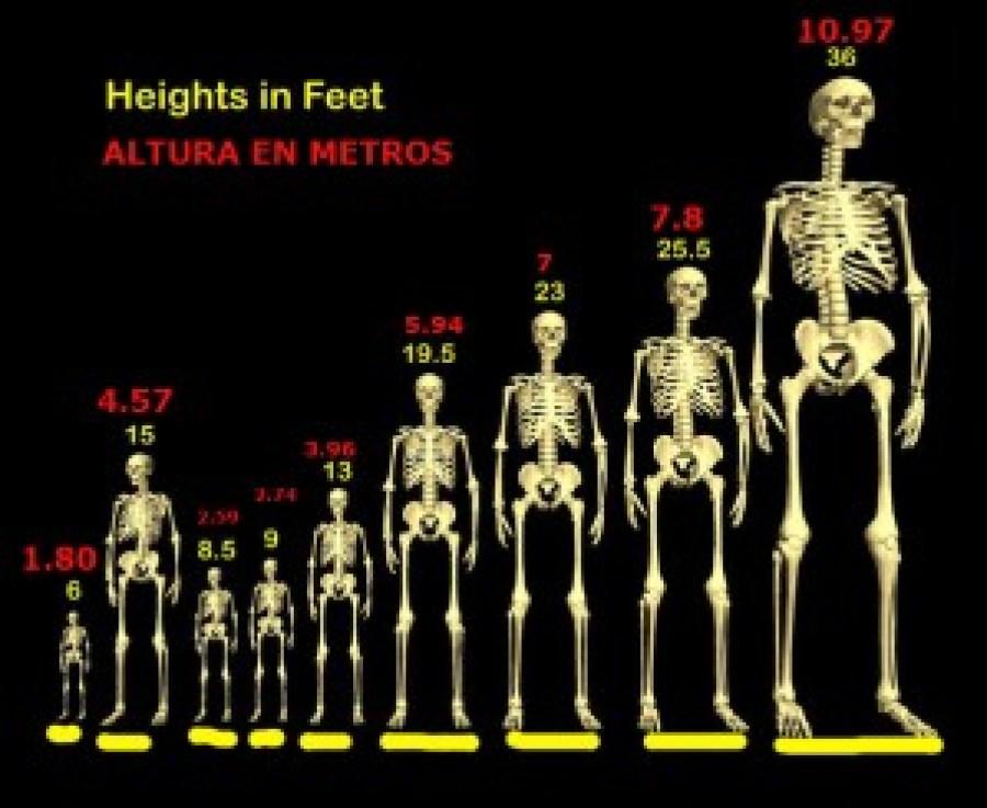 Presuntos tamaños de gigantes. Medidas comparativas.