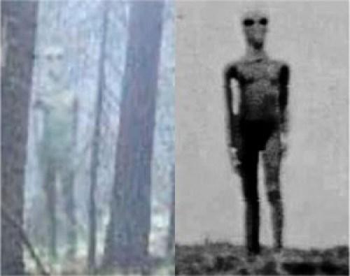 Comparativa entre los Extraterrestres Bulgaro y Argentino.
