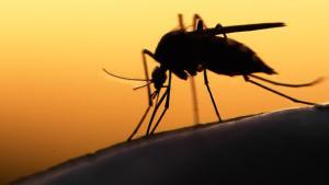 Lo Spiegante: Valcler Rangel della Fiocruz ci parla della Zika