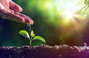 Cina e finanza verde: Finanziare la sostenibilità