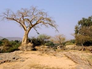 Il Great Green Wall in Africa: il progetto per la riforestazione del Sahel