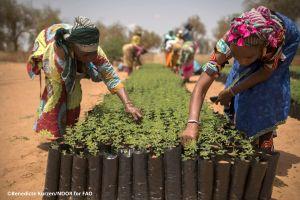 Il Great Green Wall in Africa: impatto e limiti del progetto