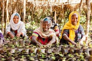 Dalla terra al mercato: il commercio del caffè in Etiopia