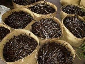 Dalla terra al mercato: il commercio della vaniglia in Madagascar