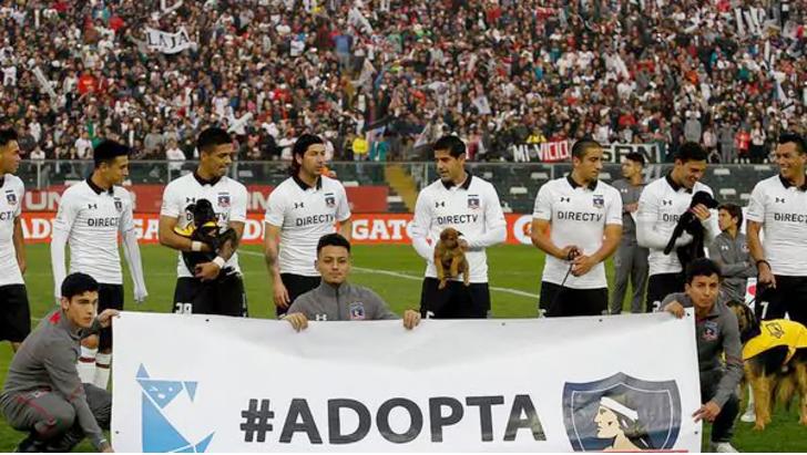 Colo Colo Perros adopción Chile