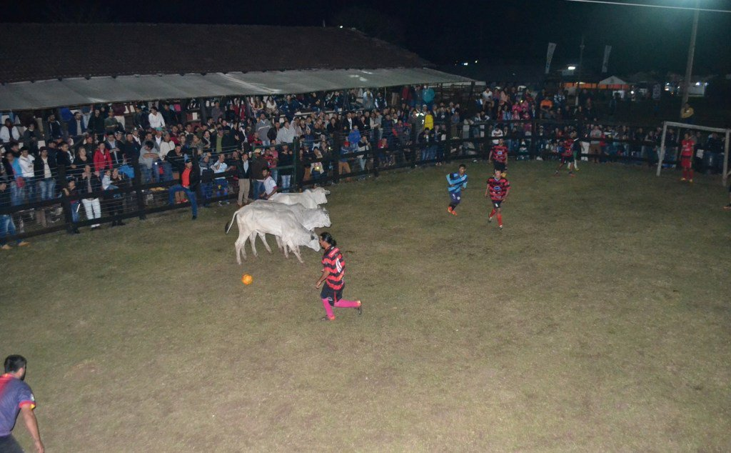 Futbol Boi, Expo Norte, Paraguay, Vaca, Deporte, Torneo