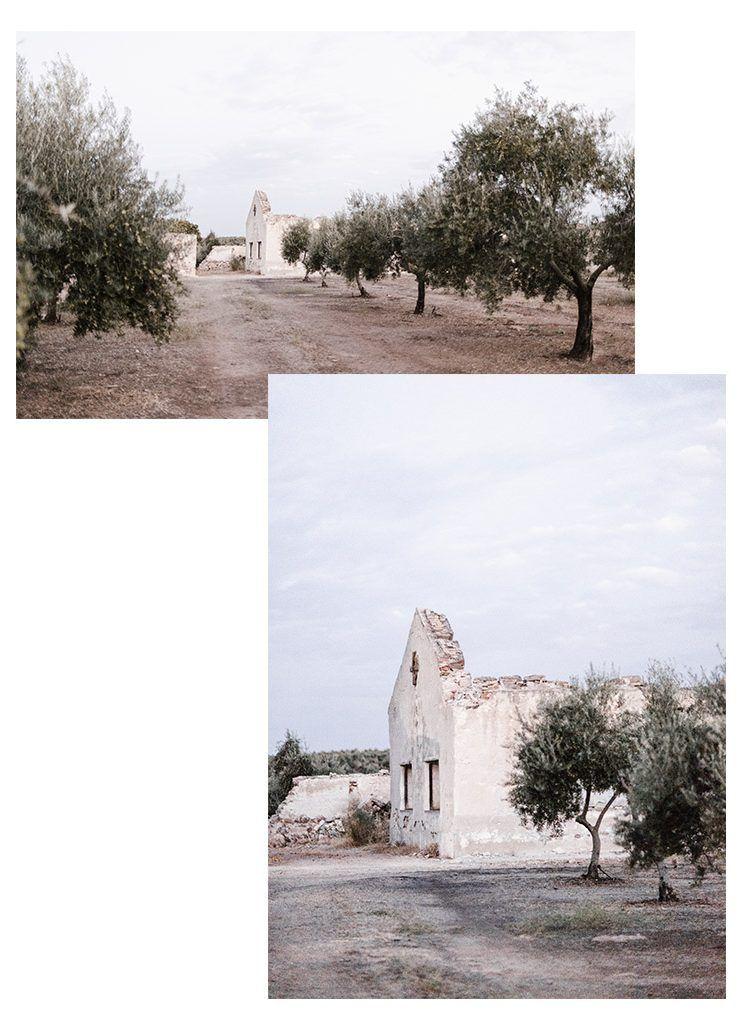 olivar 2