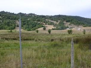 Campo saucino en Cordillera de Nahuelbuta