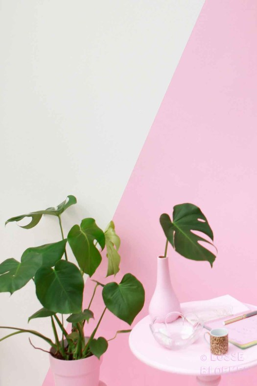 Roze losse bloemen showup Monstera. hoekje door brainydays