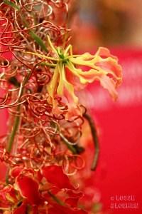 losse bloemen Trade fair Royal FloraHolland lossebloemen flowers gloriosa