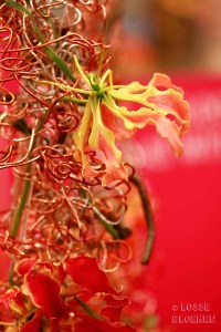 losse bloemen Trade fair Royal FloraHolland lossebloemen flowers gloriosa