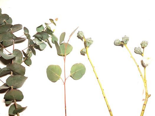 eucalyptus-losse-bloemen-blog-eucalyptus-soortjes-kerst-2017