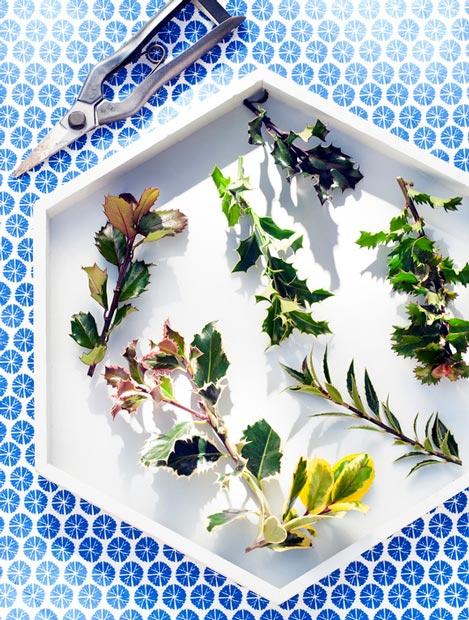 hulst-beeld-ilex--mooiwatbloemendoen-blog-over-kerstbloemen-lossebloemen
