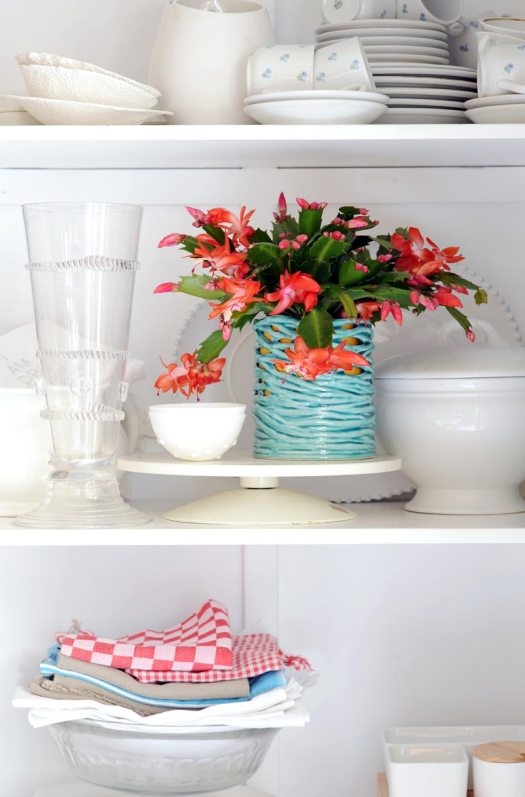 lidcactus-kerstcactus-beeldmooiwatplantendoen-losse-bloemen-blog