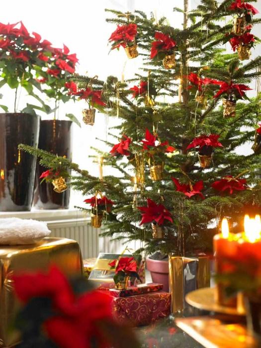 """Stijl: """"Color tone - warm"""" mooiwatplantendoen kerstster kerstbom"""