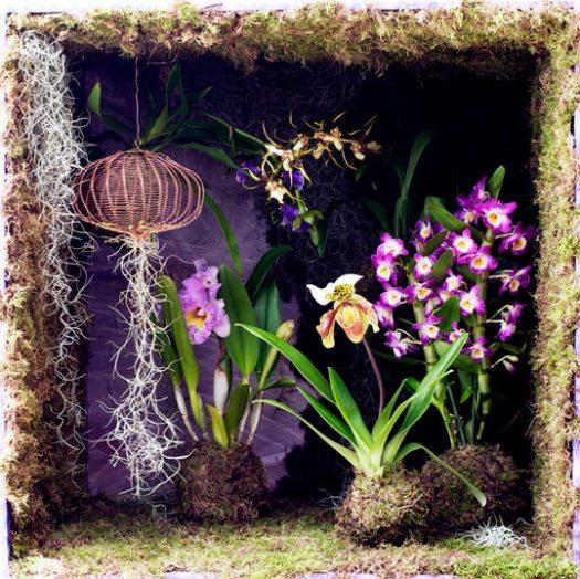 mosbal-mooiwatplantendoen-tillandsia-airplant-orchidee-mosbal-diy