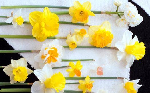 narcis-beeld-mooiwatbloemendoen-bloemen-die-staan-voor-geluk-blog-losse-bloemen