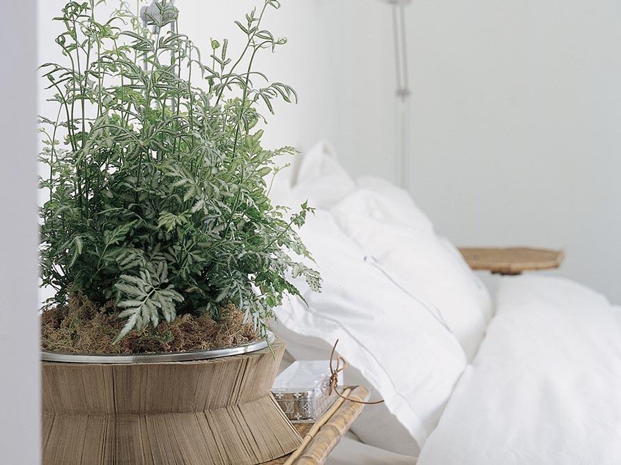 Planten voor slaapkamer welke zijn geschikt losse bloemen bloemen