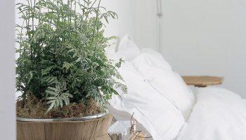 Planten Slaapkamer Baby : Hoe stek je een pilea peperomioides ofwel pannenkoekplant?