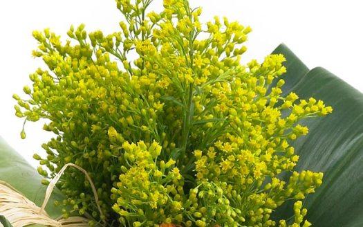 solidago-beeld-mooiwatbloemendoen-bloemen-die-staan-voor-geluk-bloemen-blog