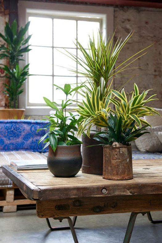 dracaena.2018.woonplant-de-maand-januari-beeld-mooiwatplantendoen-bloemen-blog industrieel interieur