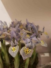 losse bloemen maison & object parijs bloemen-76