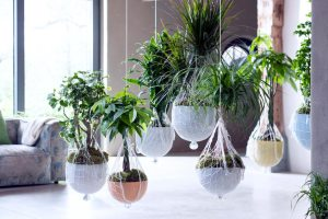 woonplanten-januari-blog-welke-planten-2018-trend-losse-bloemen-blog.-beeld-mooiwatplantendoen-