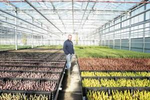 Martin Braas lossebloemen blog tulpen broeier tulpen kweker