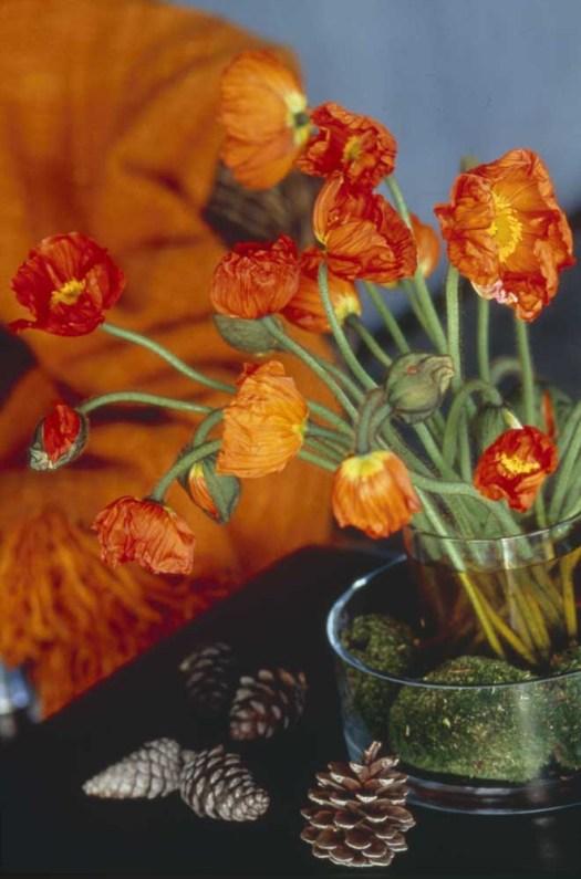 Oranje koningsdagbloemen foto- mooiwatbloemendoen.nl op losse bloemen blog Papaver